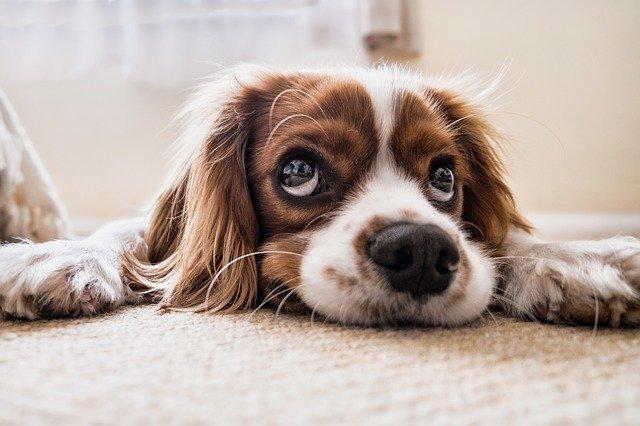 pies potrzebuje gryzaka